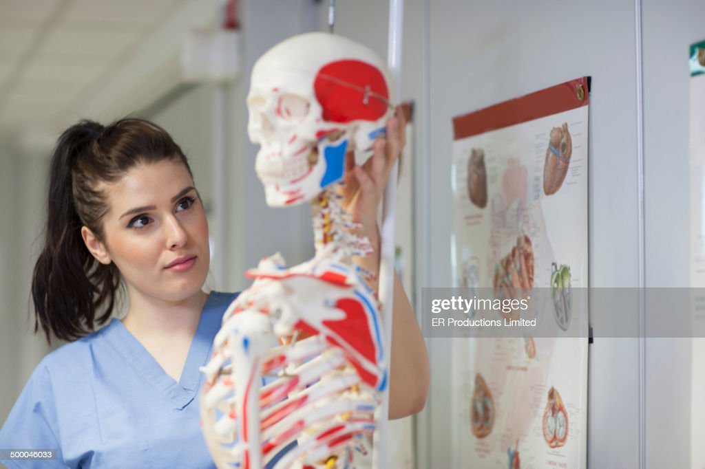 Nurse examining skeleton in doctor's office