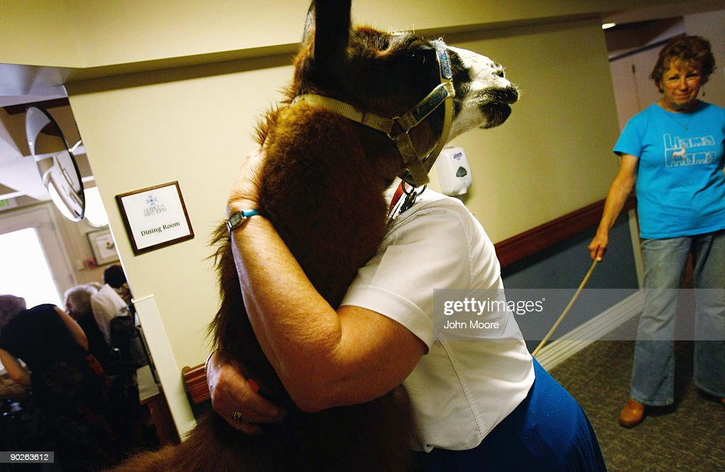 A nurse hugs Pisco, a 13-year-old therapy llama, during his visit to the Hospice of Saint John on September 1, 2009 in Lakewood, Colorado. The llama visits the hospice each month as part of an animal therapy program designed to increase happiness, decrease loniliness and calm terminally ill patients during the last stage of life. The non-profit hospice, which serves on average 200 people at a time, is the second oldest hospice in the United States. The hospice accepts patients regardless of their ability to pay, although most are covered by Medicare or Medicaid. End of life care has become a contentious issue in the current national debate on health care reform.
