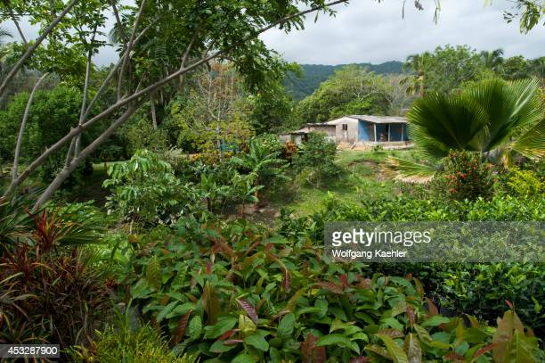 Nursery near Tayrona National Park Santa Marta Colombia