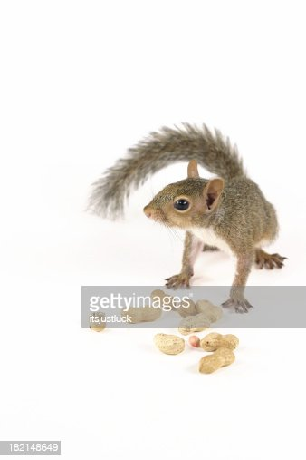 Nuts for Peanuts