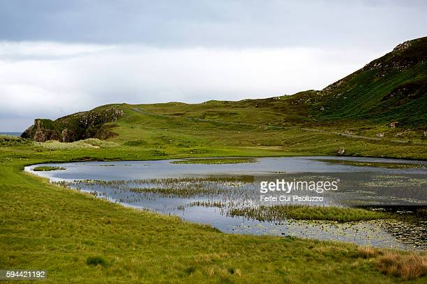 Nymphaeaceae pool at Tolsta of Isle of Lewis in Scotland