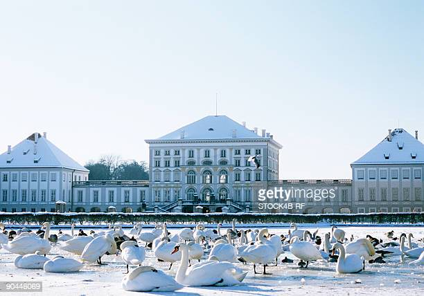 Nymphenburg Palace with swans in winter, Munich, Bavaria