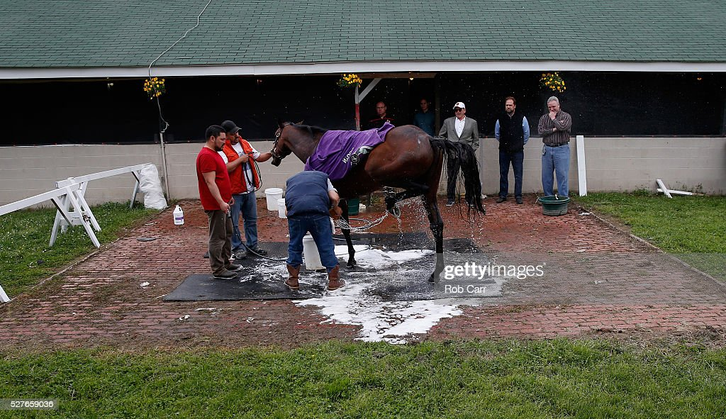 Nyquist is bathed in the barn area after training on the track for the Kentucky Derby at Churchill Downs on May 03, 2016 in Louisville, Kentucky.