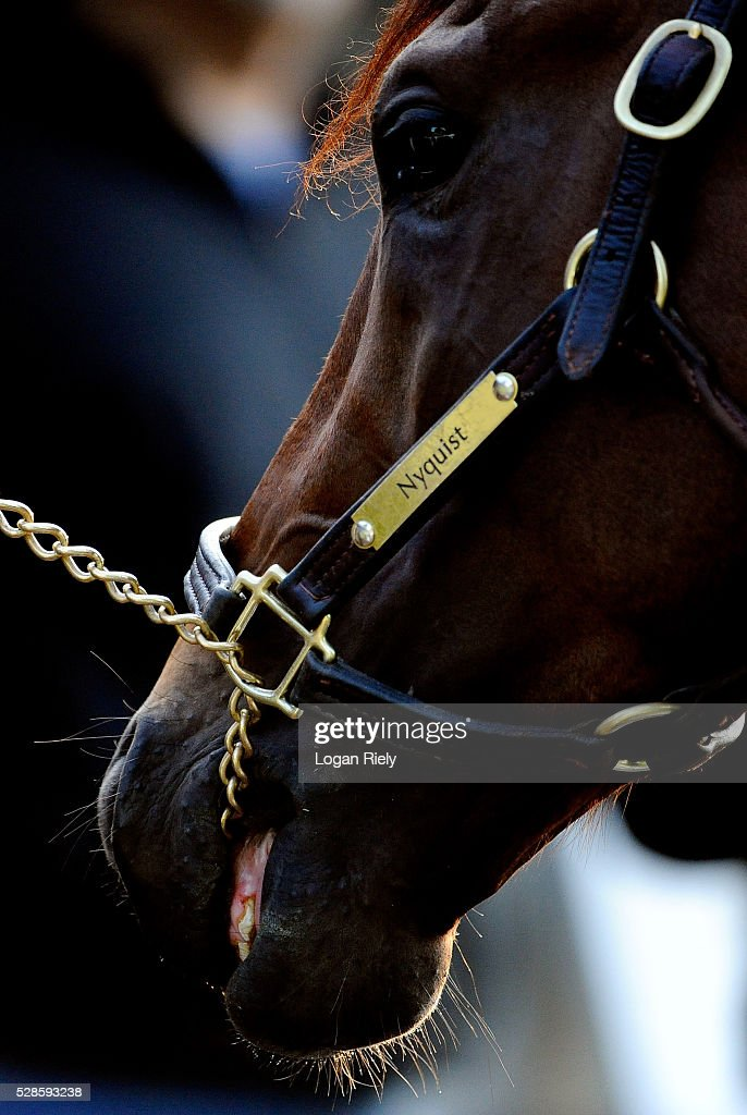 Nyquist is looked over in the barn area during morning training for the Kentucky Derby at Churchill Downs on May 06, 2016 in Louisville, Kentucky.