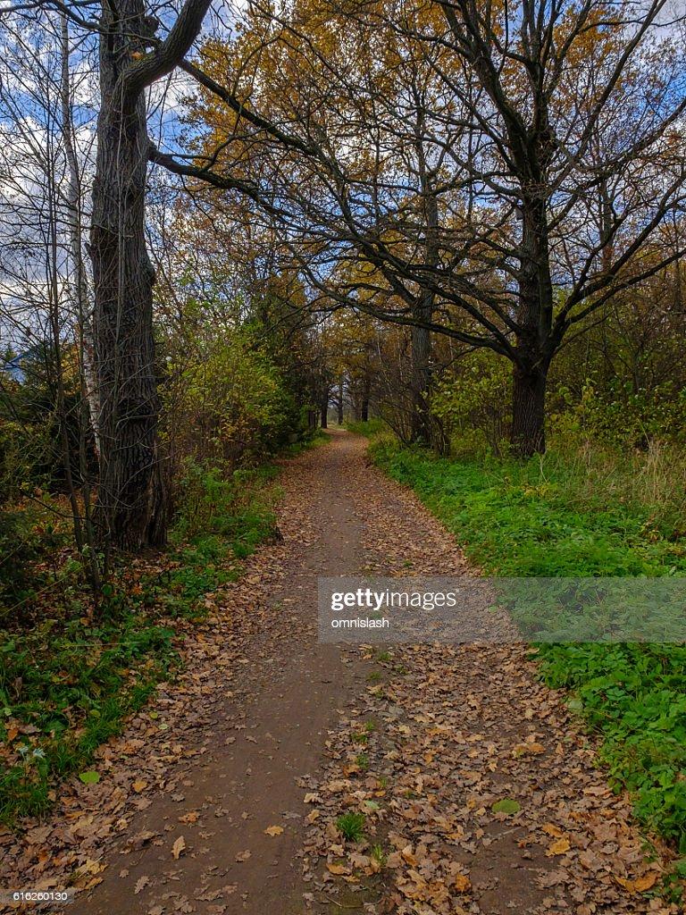 Oak grove in autumn, Moscow region : Foto de stock