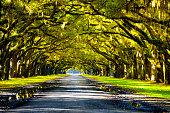 Oak tree in Georgia