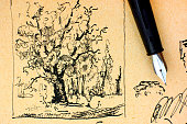 Oak tree drawing by ink with fountain pen. Close-up.