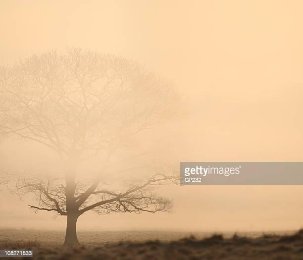 Chêne dans la brume