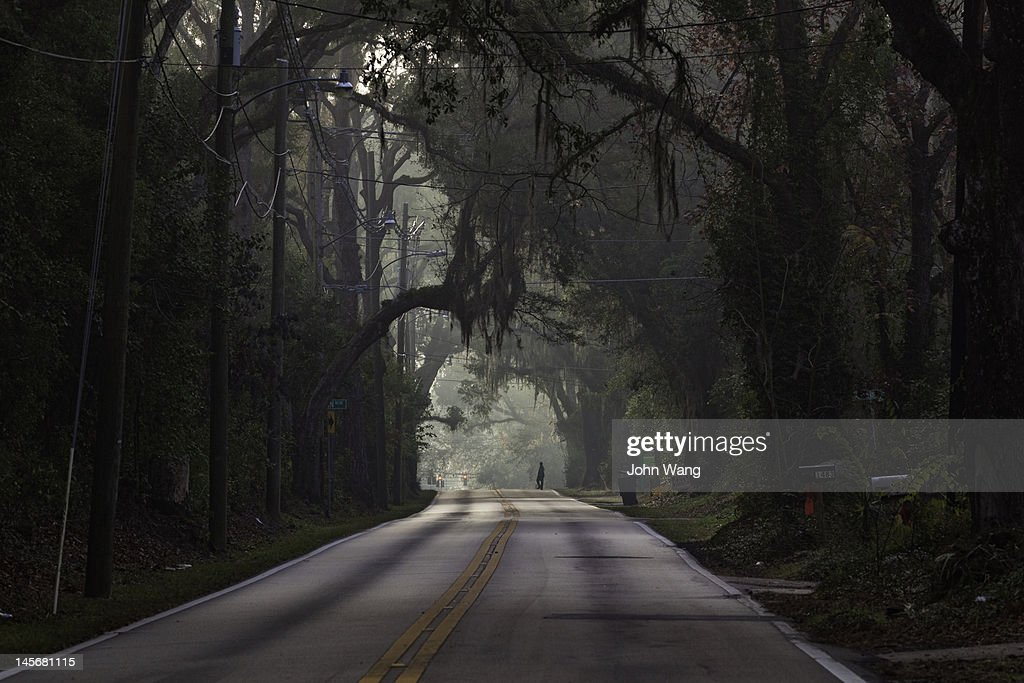 Oak trees canopy a road in Tallahassee