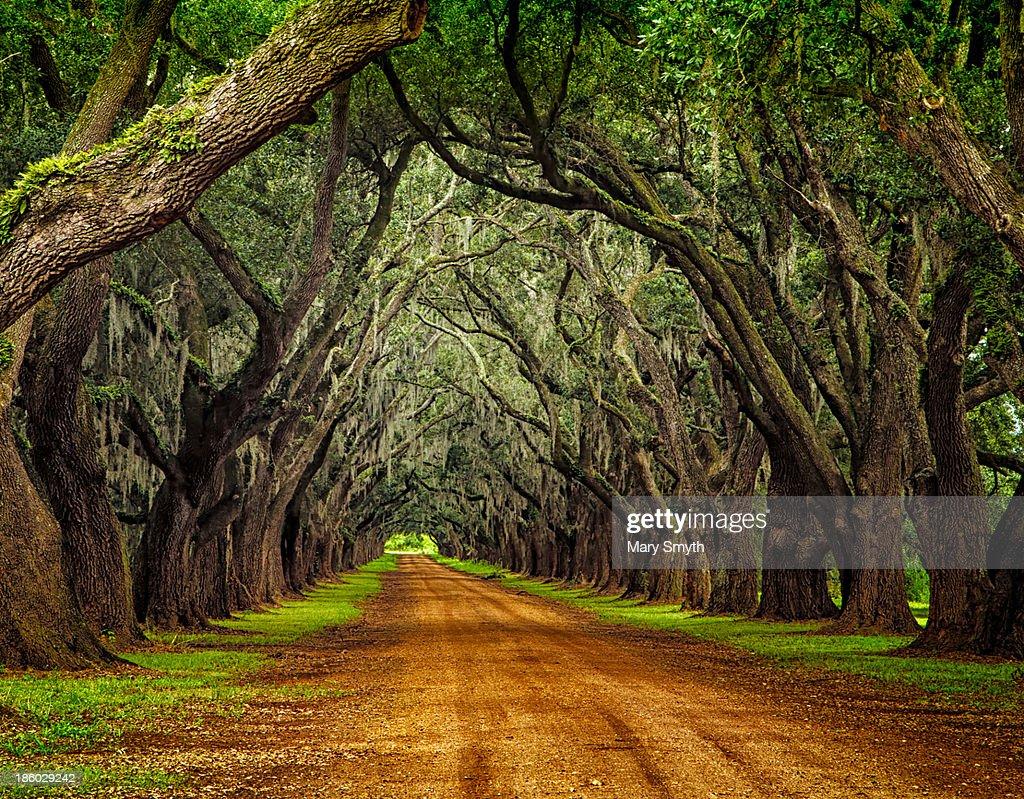 Oaks on Plantation Road