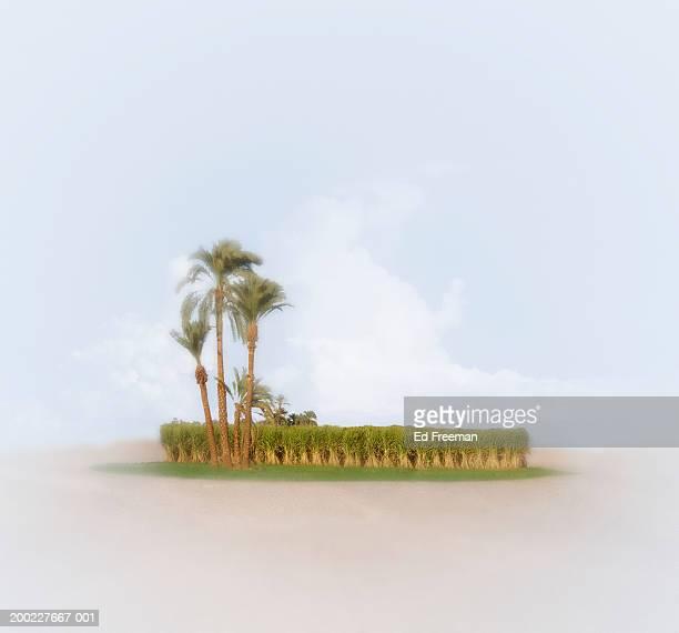 Oasis in desert (Digital Composite)