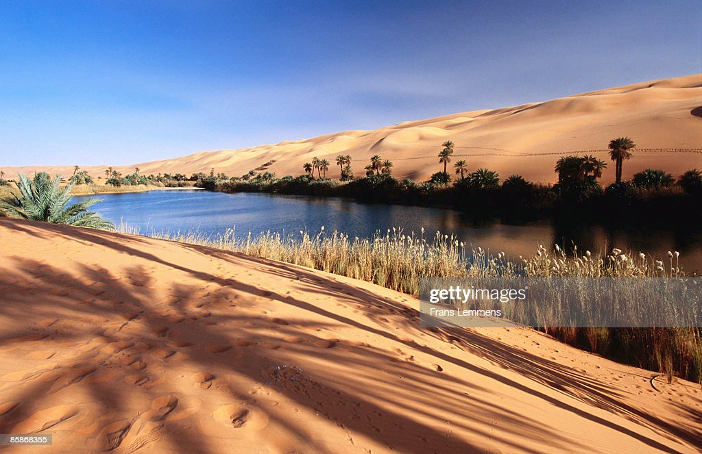 Oasis In The Sahara Desert Stock Photo | Getty Images