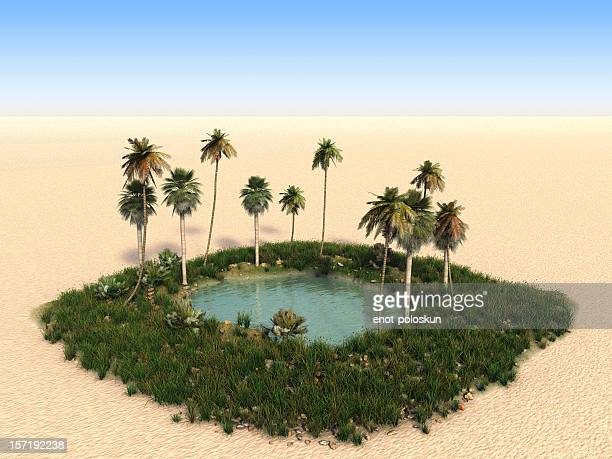 Oasis with palm trees in the middle of desert