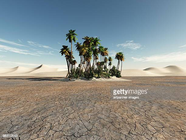 Oasis with Palms in the Desert