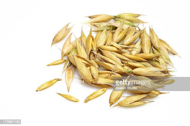 Oat grains on a white background