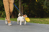 Jack Russell Terrier walks by alley at park