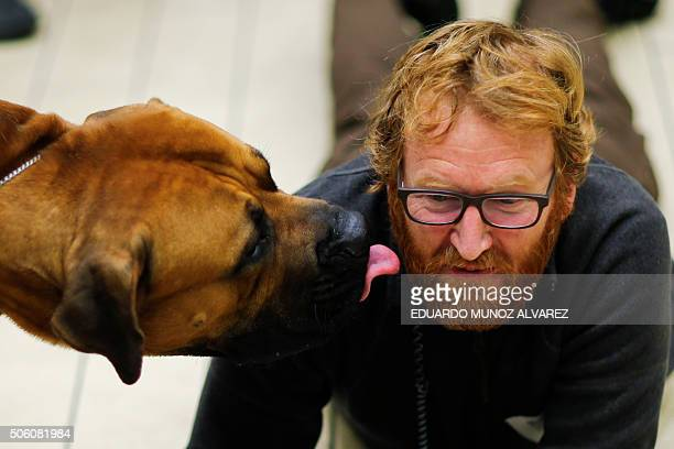 Obilo a Boerboel kisses a cameraman during the 140th Annual Westminster Kennel Club Dog Show press conference on January 21 in New York to promote...