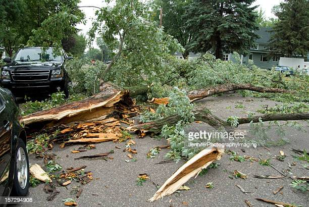 Obliterated trees from storm damage