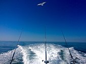 Ocean Fishing Summer Day on the Open Ocean