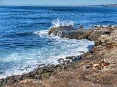 La Jolla Cove with Sea Lions