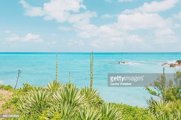 Ocean, sky and cactus in Bermuda