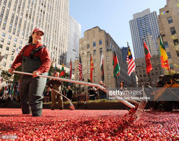 Ocean Spray set up a cranberry bog in Rockefeller Center for people to learn about cranberry harvesting Cranberry grower Cristina Tassone from...