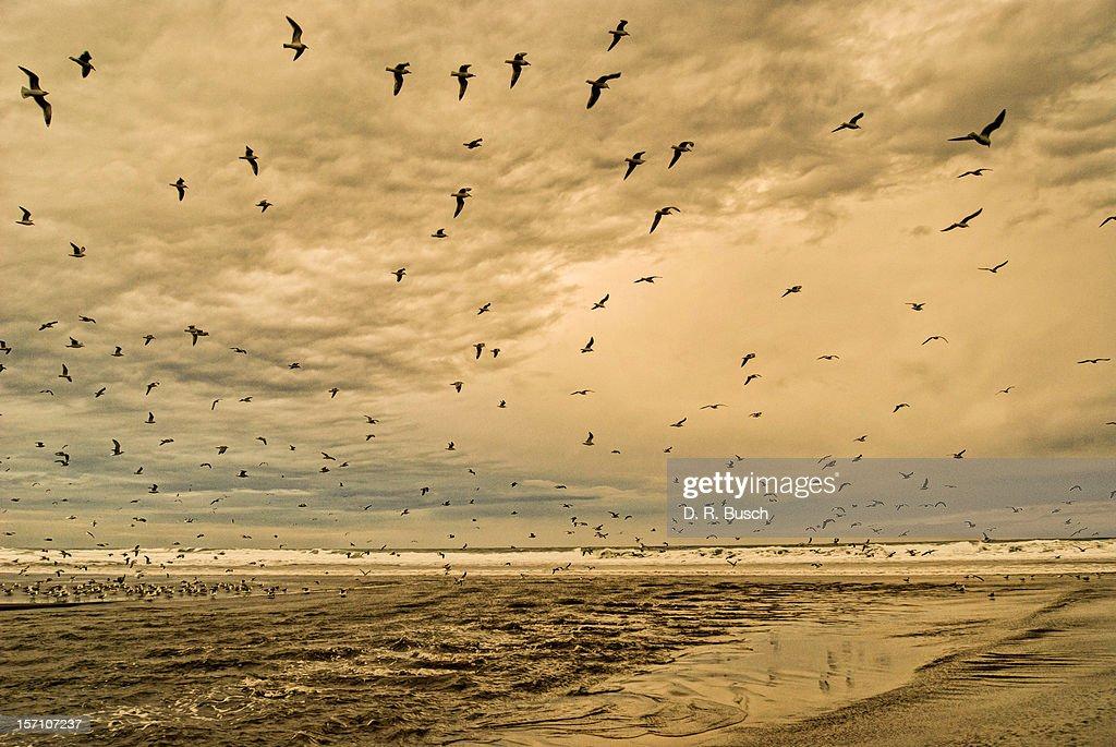 Ocean storm : Stock Photo