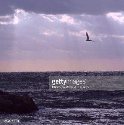 Ocean sunrise with seagull
