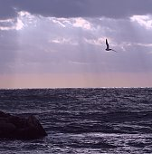 Ocean sunrise with seagull