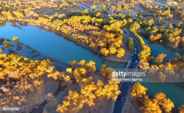 QI Oct 13 2017 Photo taken on Oct 13 2017 shows the trees of populus euphratica in Ejin qi north China's Inner Mongolia Autonomous Region