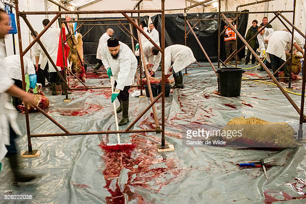 October Brussels Belgium During Eid alAdha many Muslim families sacrifice a sheep and share the meat with the poor Cleaning of the temporary...