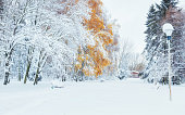 October mountain beech forest with first winter snow.