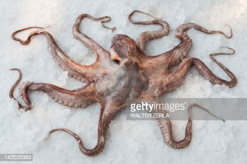 Pulpo fondo blanco fotograf as e im genes de stock getty - Sal de roca ...