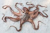 Octopus on bed of rock salt