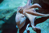 an octopus moving in the water