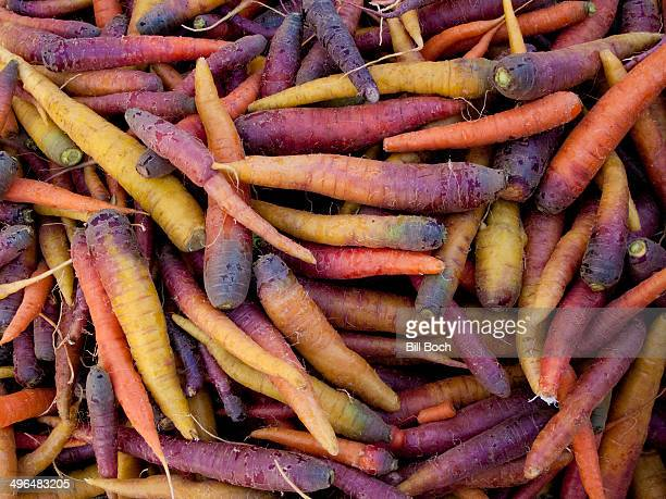 Odd colored heirloom carrots