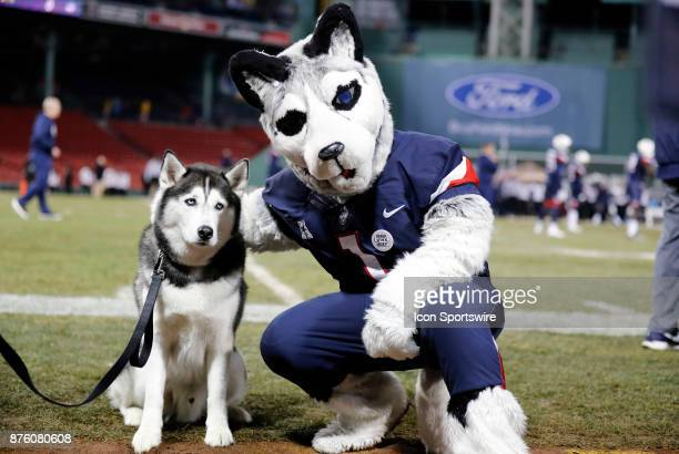 UCONN official mascot Jonathan XIV poses with costumed mascot before a game between the UCONN Huskies and the Boston College Eagles on November 18 at...