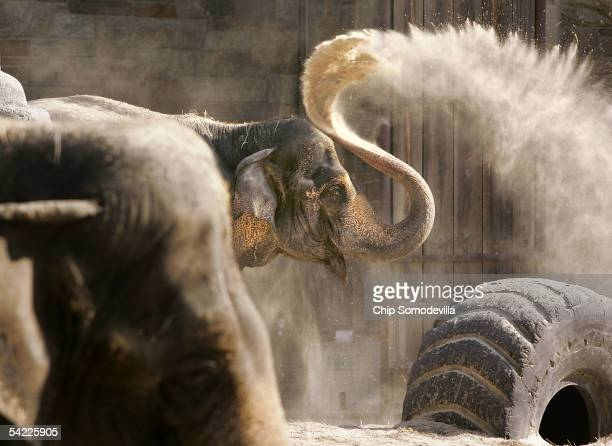 Officials from the Smithsonian National Zoological Park announced that Toni one of two older female Asian elephants at the zoo in Washington DC is...