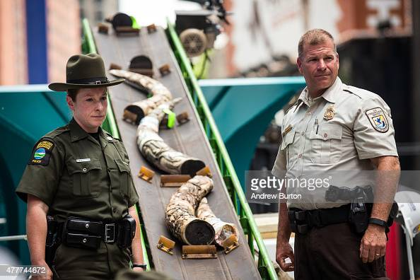 Officials from the US Fish and Wildlife Service destroy ivory trinkets confiscated by law enforcement in Times Square on June 19 2015 in New York...