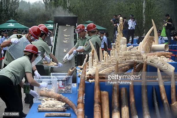 Officials of the forestry authority load ivory pieces confiscated from around the country onto a crusher on May 29 2015 in Beijing China Officials...