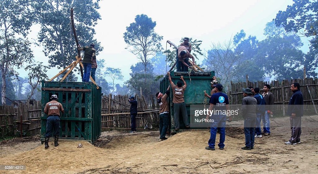 Officials works the container the transport the two hand reared Rhino at the Manas National Park from the Kaziranga National Park in Golaghat...