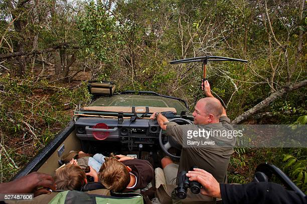 Offroading through the bush searching for a leopard with a radio collar in a safari land cruiser in the Phinda Game Reserve Phinda Private Game...