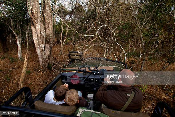 Offroading through the bush searching for leopard in a safari land cruiser in the Phinda Game Reserve Phinda Private Game Reserve encompasses an...