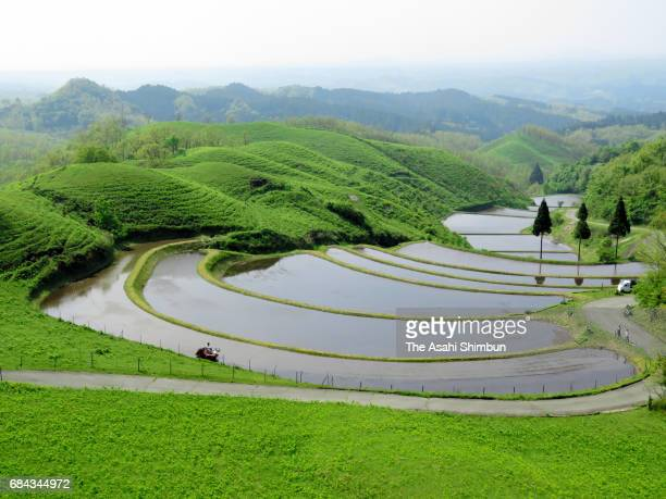 Ogi rice terrace is seen on May 14 2017 in Ubuyama Kumamoto Japan