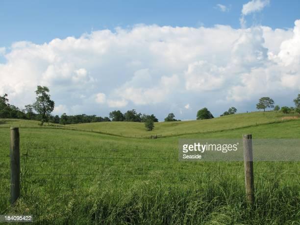 Ohio Meadow Landscape