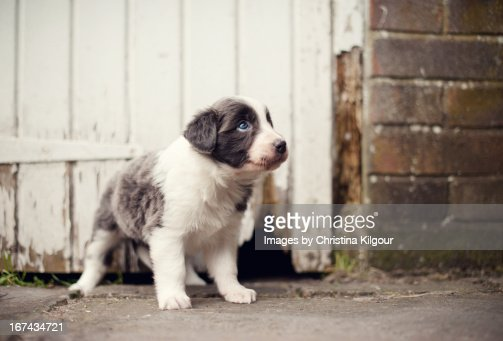 Oh.......stop it with the sad puppy eyes (!!) : Stock Photo