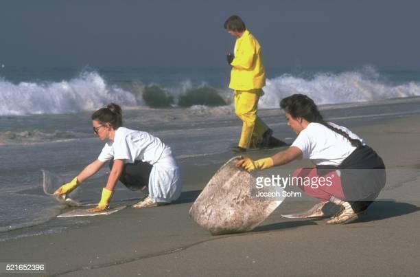 Oil Cleanup Volunteers