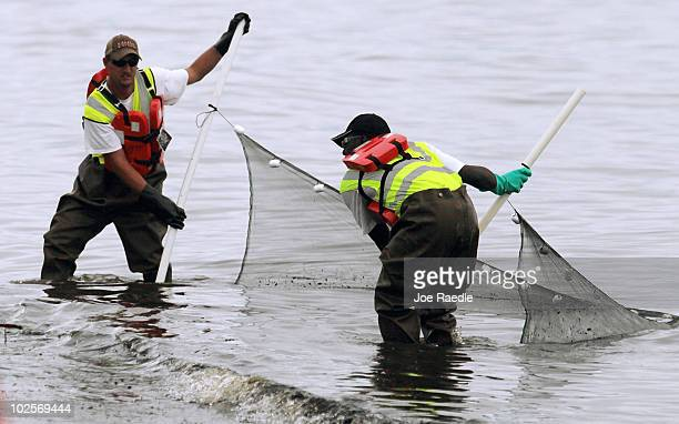 Oil cleanup workers use a net as they try to capture globs of oil that were washing ashore from the Deepwater Horizon oil spill in the Gulf of Mexico...