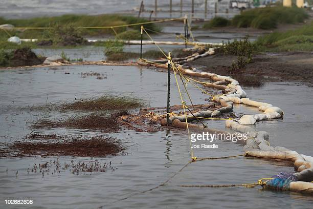 Oil coats plants and oil absorbent material as high winds and waves caused the cancellation of cleanup operations on the beach on July 7 2010 in Port...