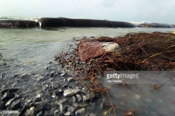 Oil coats plants and rocks as high winds and waves caused the cancellation of cleanup operations on the beach on July 7 2010 in Port Fourchon...